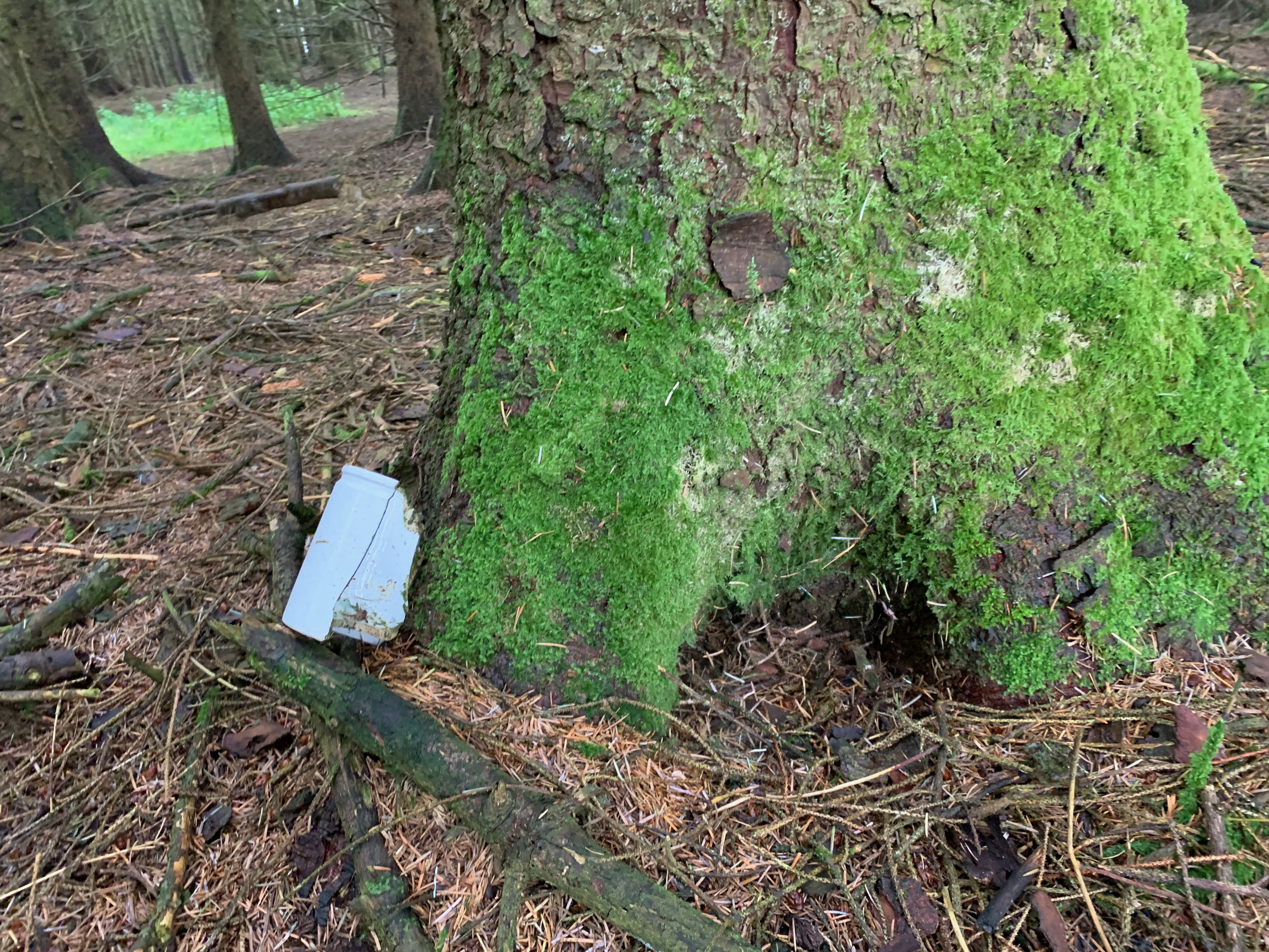 remains of half a earthenware mug agains a tree in a forest