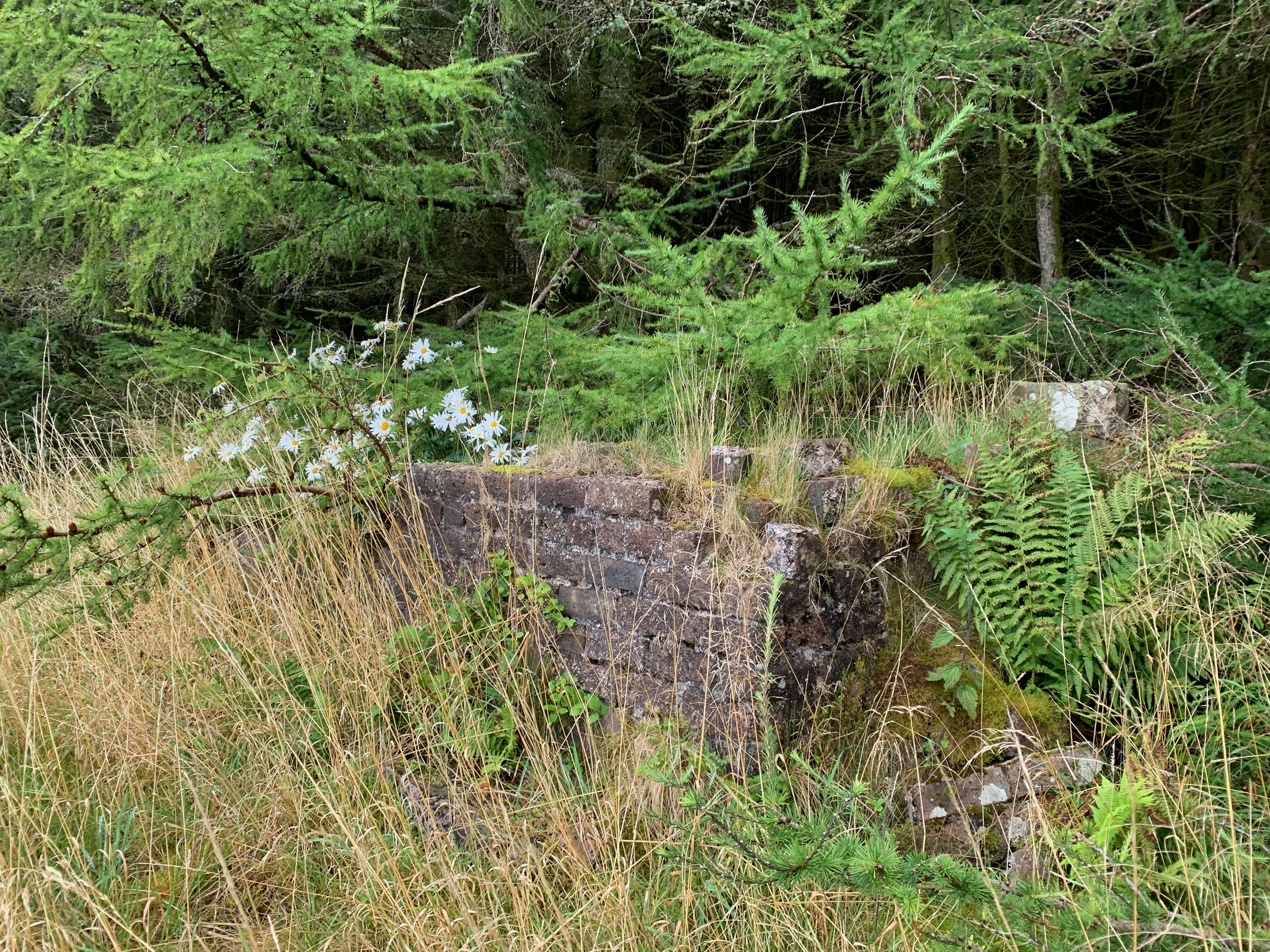Remains of a a corner house with grass around it, flowers inside it and a forest in the background