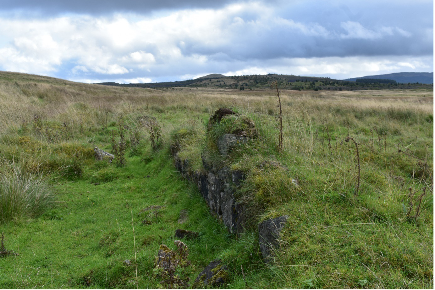 Remains of a miner's row in Benwhat Ayrshire. Shows small wall covered in and surrounded by grass